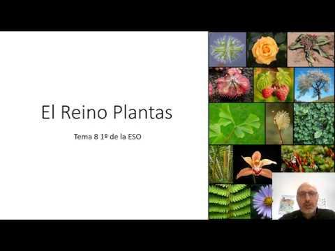 el-reino-plantas-tema-8-asignatura-biología-y-geología-1º-de-la-eso