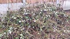 How to Clear Brambles!