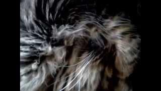 хропящего кота разбудили