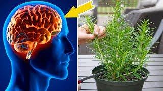 Mit dieser Pflanze steigerst du deine Gedächtnisleistung und schützt dein Gehirn vor Alzheimer