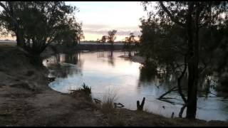 Nature Sounds, Birds of the Australian Outback. Wildlife Sound Effect. 1 hour