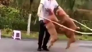 Funny dogs moments