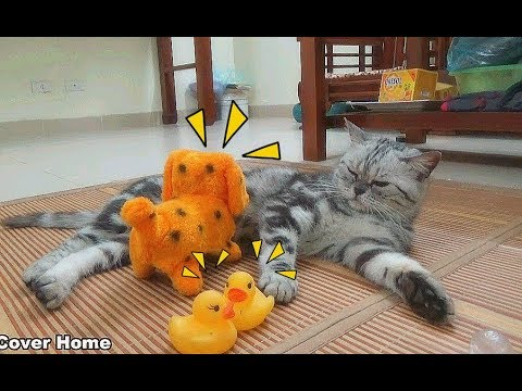 Cat So Exciting With Dog Toy And Duck | Funny Dog vs Cat Fight 2017 | Meo Cover Home
