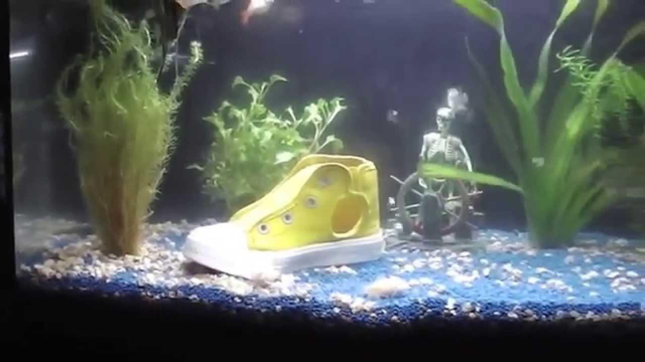 Pecera y tipos de peces youtube for Peces de pecera