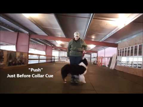 Training New Behaviors with Collar Cues