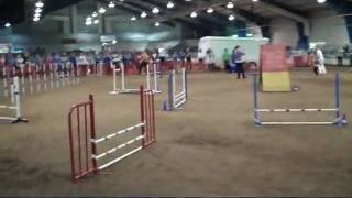 Gspca Agility Judges Chase Away K9 Cancer Part 2