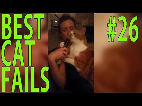 Best Cat Fails: #26 | FAIL.GROUP