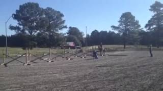 My horse doing 6 bounce jumps.