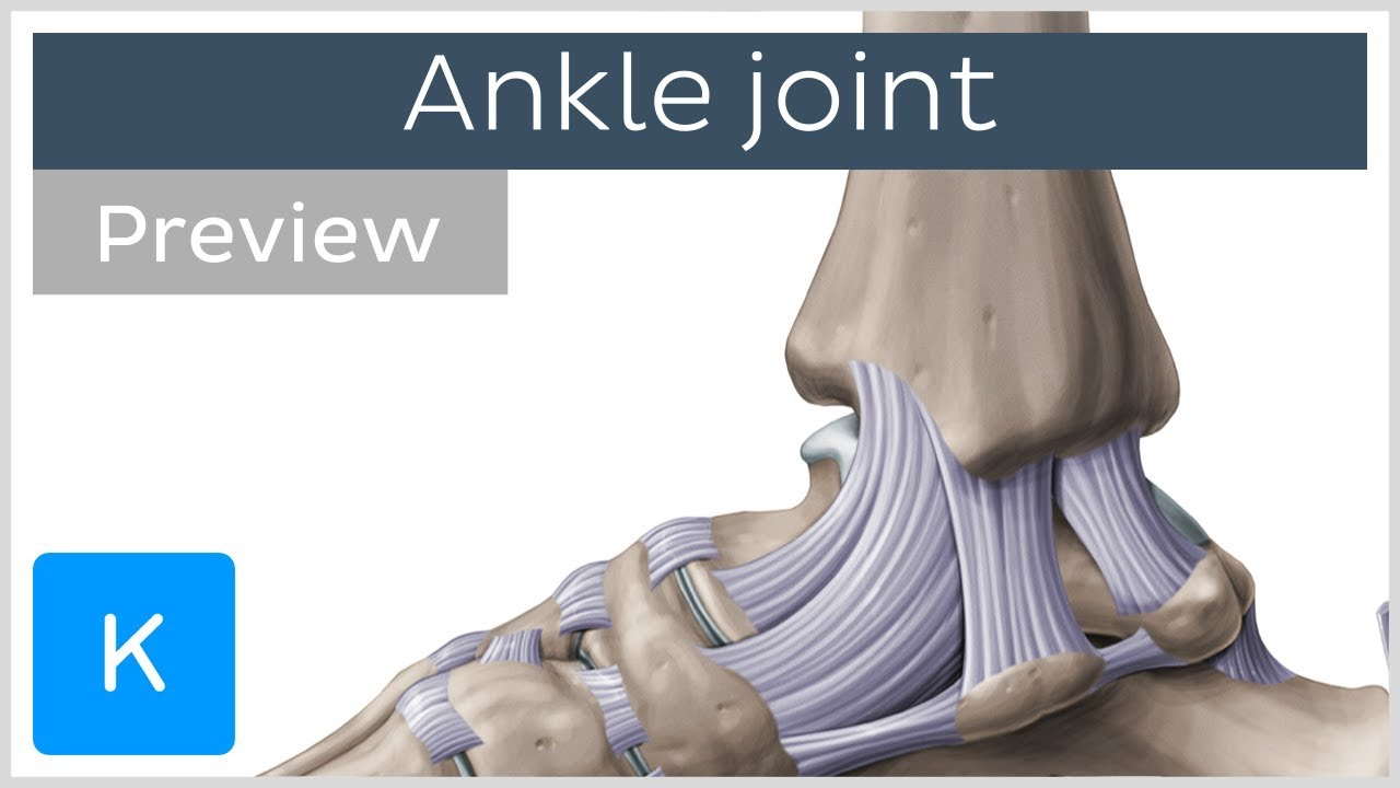 Ankle joint: bones and ligaments (preview) - Human Anatomy ... - photo#4