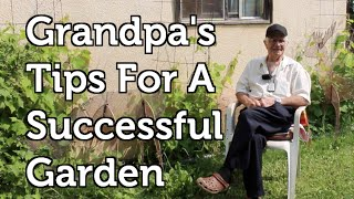 Grandpas Tips for a Successful Garden, Fertilizing your Tomatoes for Free and Propagating Grapes