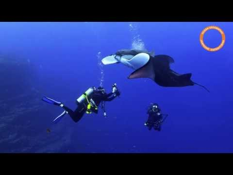 ENIGMA - the mantas at  Revillagigedo Islands, Pacific Ocean