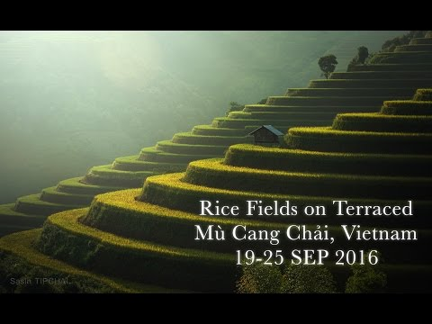 Trailer : Rice Fields on Terraced