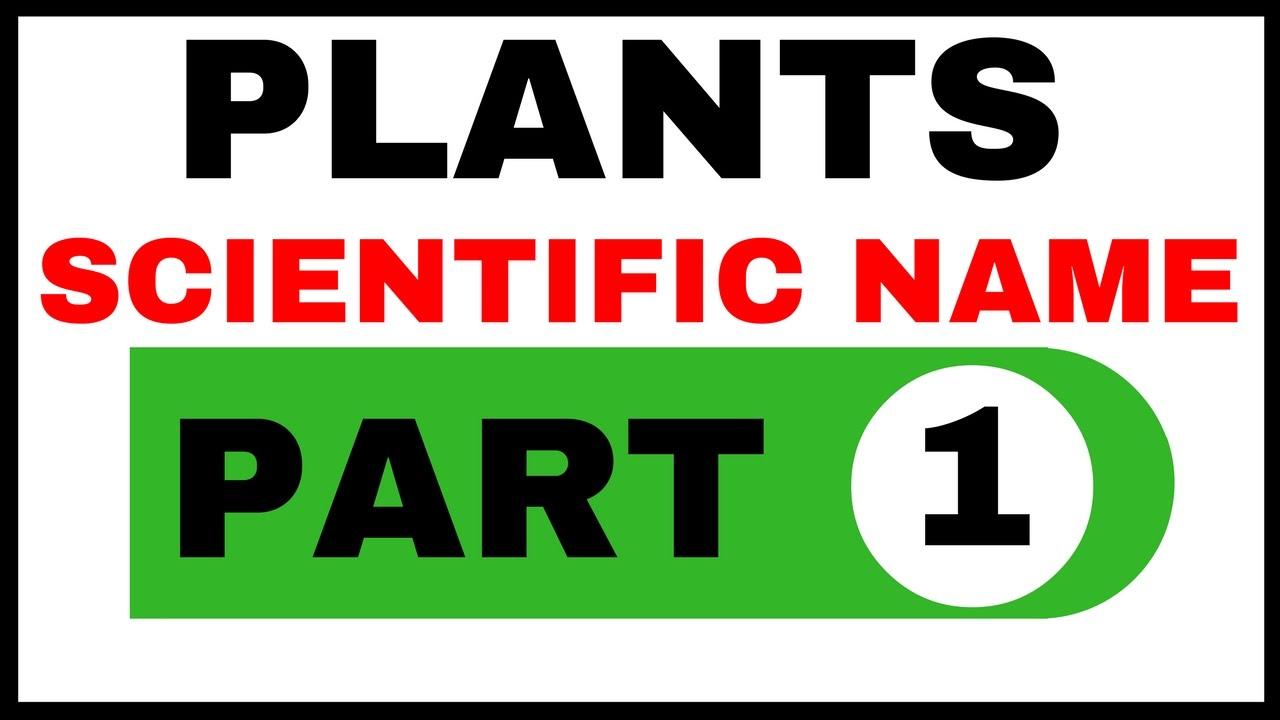 Plants Scientific Name Part 1 पध क वजञनक
