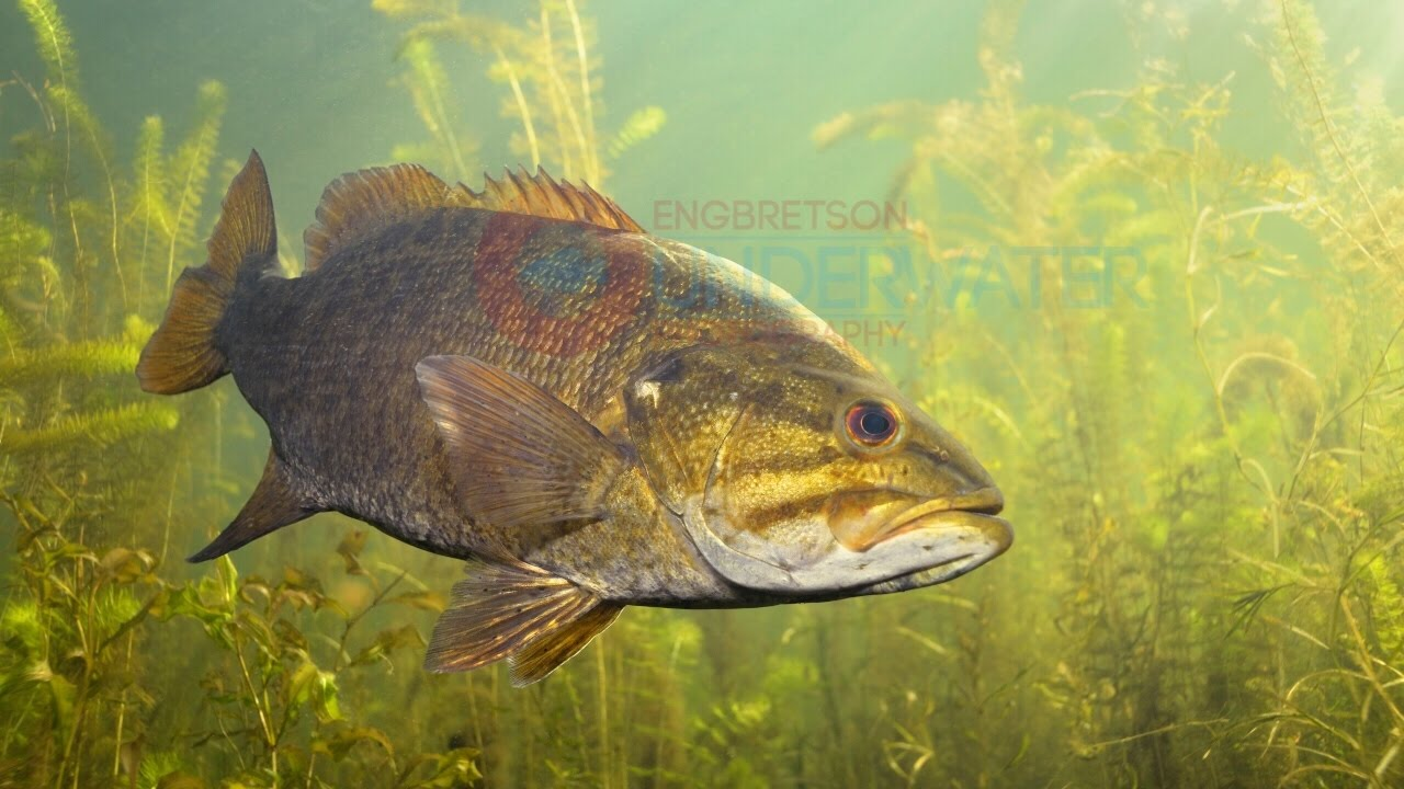 New Underwater Fish Images