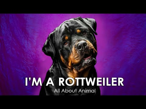 I'm a Rottweiler – Story About Rottweilers from Talking Dog