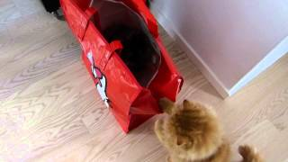 What's in the Hello Kitty bag?...Oh hello kitty
