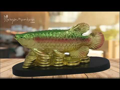 Divya Mantra Feng Shui Prosperity Arowana Golden Dragon Fish With Gold Coins