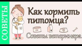 Как кормить собаку, кошку. #Советы_ветеринара