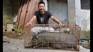 华农兄弟:抓只猪回来处理剩饭剩菜,顺便抓只鸡来炖,很香哦