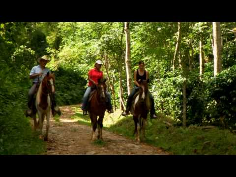 Honduras: Coffee Plantation Tours