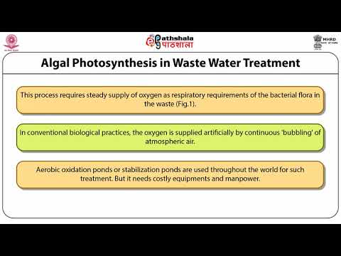 Biotechnological Methods In Pollution Abatement