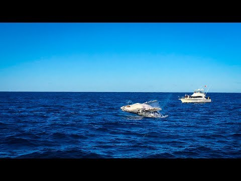 Best Whale Watching Near To Sydney 2017