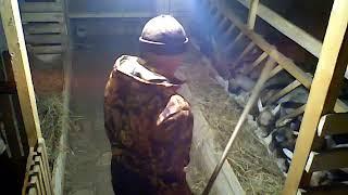 Кормушка для сена козья - Вечернее кормление коз 06.01.2019