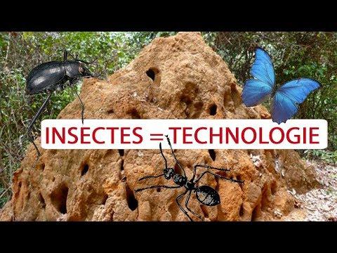 4 Insectes Qui Ont Inspiré La Science !  -  Science Et Vie TV