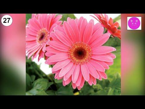 Красивые живые цветы #цветы #живые #красивые #букеты #прекрасные #букеты #розы #хризантемы