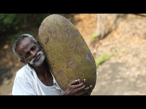 KING of JACK FRUIT Tasting My DADDY / Village food factory