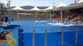 Full Dolphin Show - Marineland - Mallorca 2014
