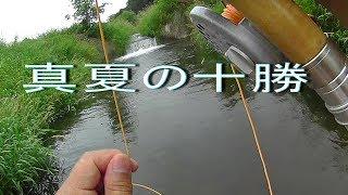 真夏の十勝を釣り歩く 道東十勝の釣り (対象魚:ニジマス) thumbnail