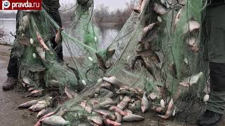 В Тамани браконьеры наловили на миллион [РЫБАЛКА, НОВОСТИ]