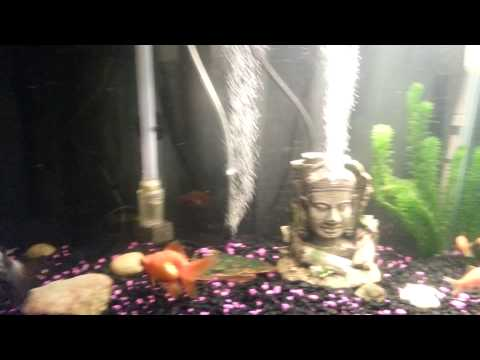 Diy air stone bubbler