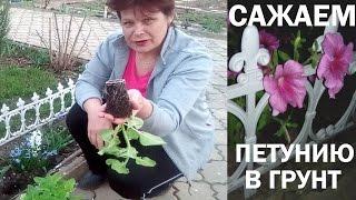 видео Посадка тюльпанов весной - когда и как посадить в открытый грунт или горшки