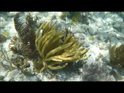 2017 - Snorkeling off of Key Largo, FL