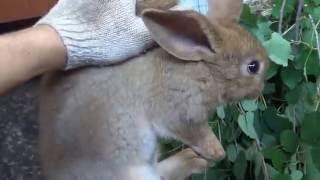 Кролики в яме часть 6 Иркутск 26 июня 2016(Кролики в яме часть 6 Иркутск. Яма для кроликов. Ниппельные поилки для кроликов. Разведение кроликов в яме...., 2016-06-26T11:02:35.000Z)