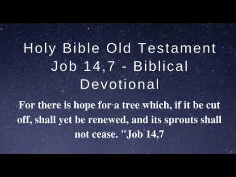 Holy Bible Old Testament Job 14,7 (Biblical Devotional)