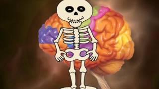Анатомия человека для детей обучающее