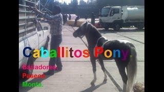 Caballitos. Ponny para fiestas a domicilio. D.F. Estado de Mexico.