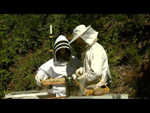 The Asheville Bee Charmer