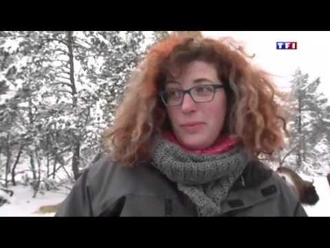 Journal du 13h TF1 Bisons Europe