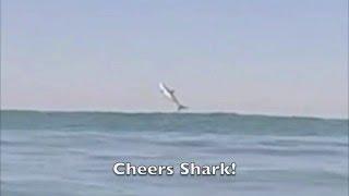 ca surfer drew palumbo films a great white shark breaching jumping surfing at sunset beach 4 18