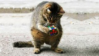 「かわいい猫」 笑わないようにしようとしてください - 最も面白い猫の映画 #357
