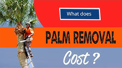 Palm Tree Removal Cost - Complete Guide