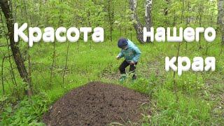 Гуляем по майскому лесу всей семьей / опять не нашли сморчки / природа юга Нижегородской области