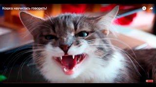Кошка научилась говорить!