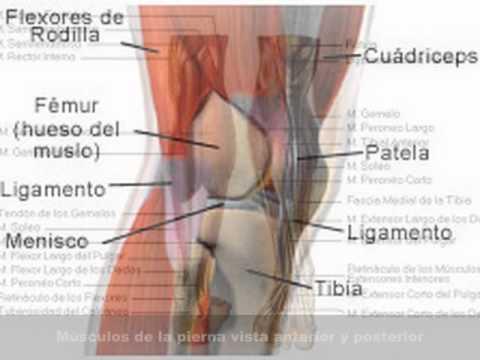 musculos de la pierna - YouTube