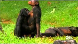 Rozkosze Afrykańskiej dżungli