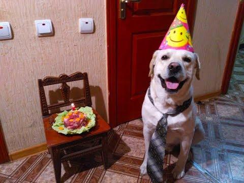 День рождения моей собаки. День рождения Лабрадора Цезаря.